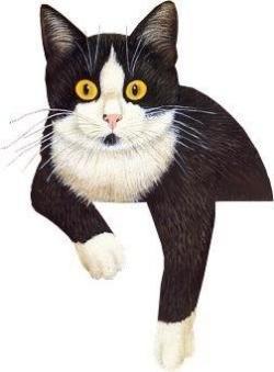 Tuxedo Cat clipart