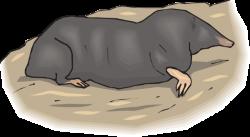 Mole clipart mole hole