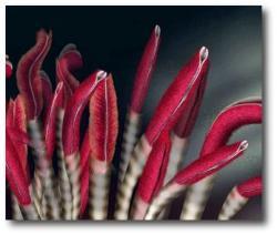 Underground clipart worm