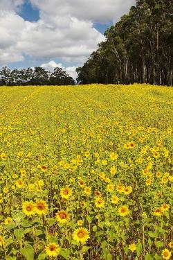 Valley clipart flower field