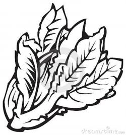 Kale clipart black and white