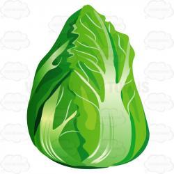 Lettuce clipart single vegetable