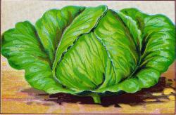 Lettuce clipart vintage