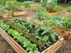 Soil clipart community gardening