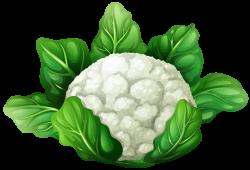 Cauliflower clipart cabbage