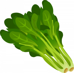 Kale clipart spinach leaves