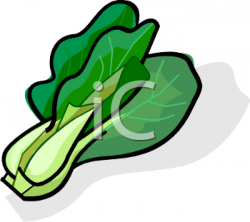 Cabbage clipart leafy vegetable