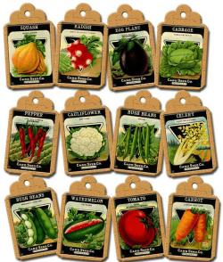 Seeds clipart seed packet