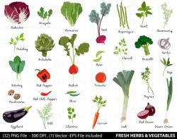 Kale clipart vegatable