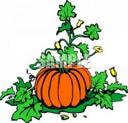 Vegetables clipart vine