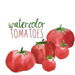 Tomato clipart veggie patch