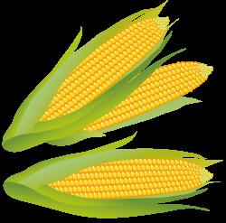 Cornfield clipart sweet corn