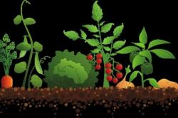 Vegetables clipart vegetable gardening