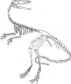 Drawn dinosaur skinny