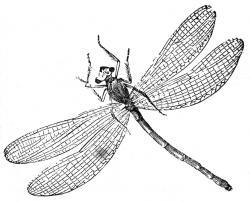 Dragonfly clipart mandala