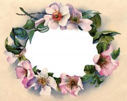 Victorian clipart wild rose