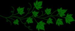 Drawn ivy vine