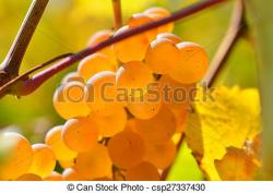 Vineyard clipart autumn