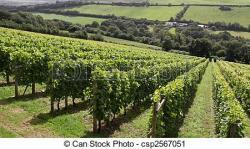 Vineyard clipart crop