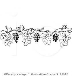 Vineyard clipart grape plant