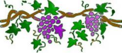Vineyard clipart grape tree