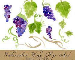 Vineyard clipart high resolution