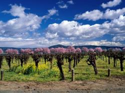 Vineyard clipart orchard