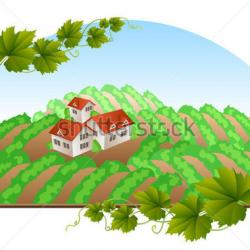 Vineyard clipart rural community