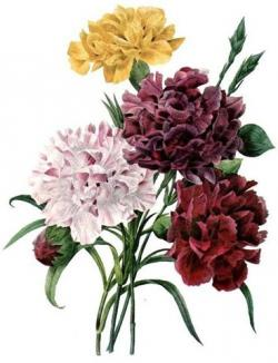 Carnation clipart vintage bouquet
