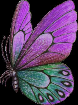 Papillon clipart bug