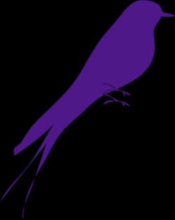 Bulbul clipart purple bird