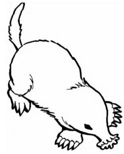 Mole clipart drawing