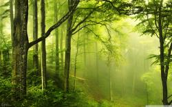 Wallpaper clipart forest