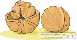 Walnut clipart