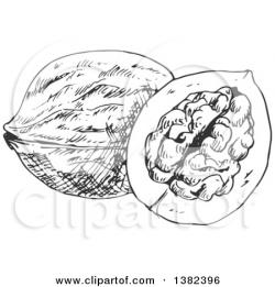 Walnut clipart black and white