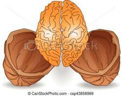 Walnut clipart brain