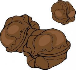 Walnut clipart brown objects