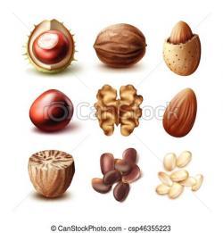 Walnut clipart nutmeg