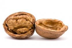 Walnut clipart nutshell