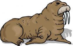 Nutria clipart walrus
