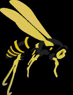 Hornet clipart wasp