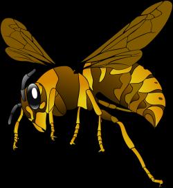 Hornet clipart eyes