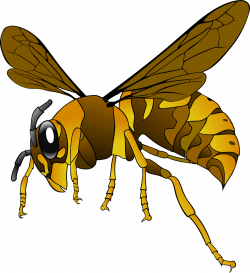 Wasp clipart transparent