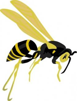 Wasp clipart vector