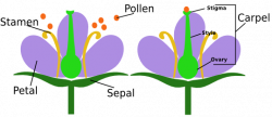 Pollination clipart simple