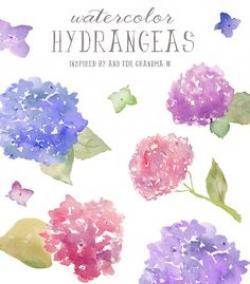 Hydrangea clipart dainty flower