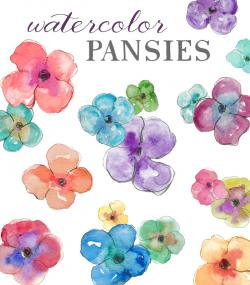 Pansy clipart watercolor