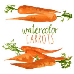 Carrot clipart watercolor