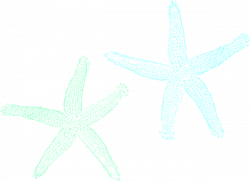Mint clipart starfish