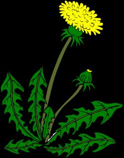 Dandelion clipart cartoon
